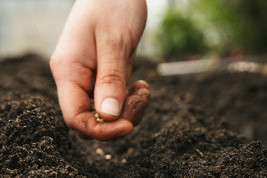 Man Placing Seeds on Dirt --- Image by © Paul Burns/Corbis